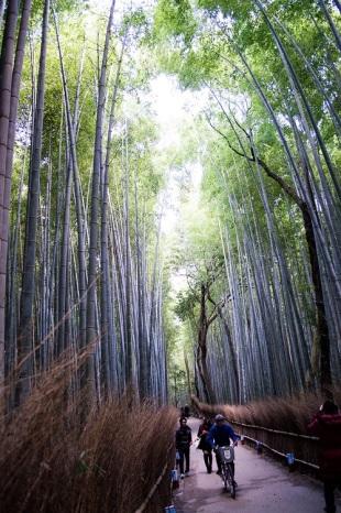 Bambusskog