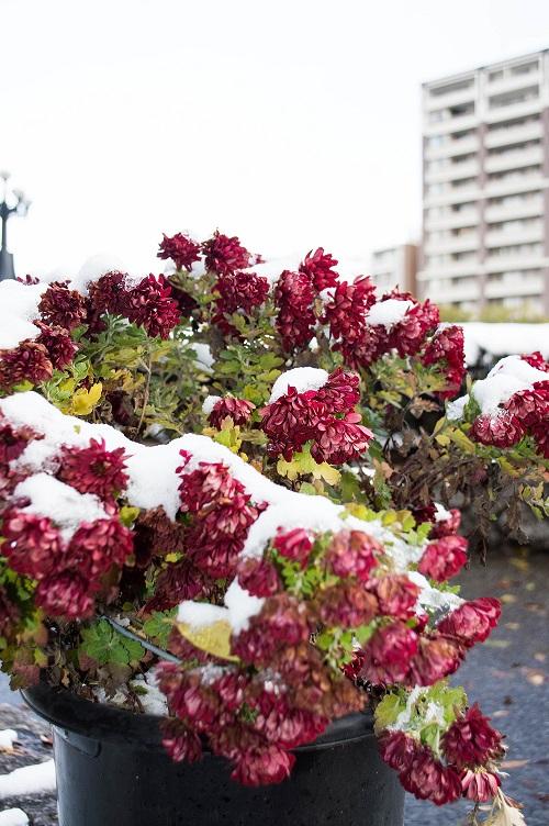 Blomster i Hiroshima