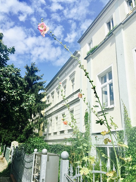 Potsdam_blomst_tn