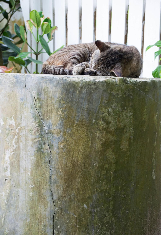 Katt_Okinawa